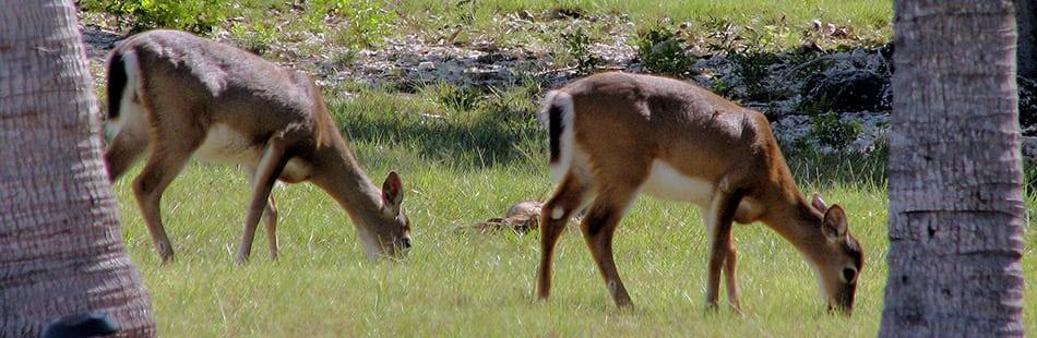The Florida Keys' National Key Deer Refuge
