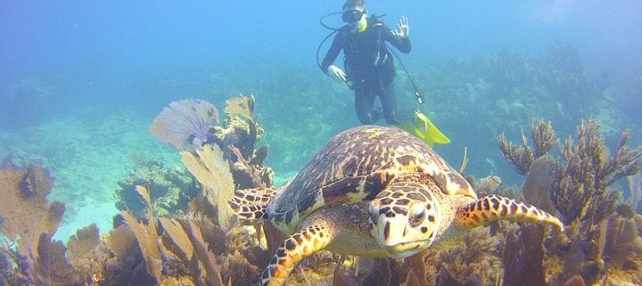 Man snorkeling with large turtle
